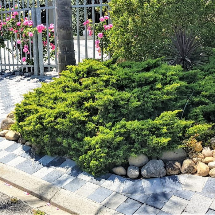 ECO PAVERS CHARCOAL _ GREY USED FOR LANDSCAPING JOB
