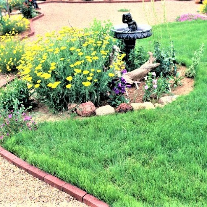 Gravel walkway with brick edging by birdbath in island bed with Buffalo Grass lawn